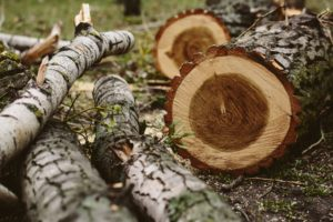 Timber! Rights & Obligations of Landowners and their Trees | Boylan Code
